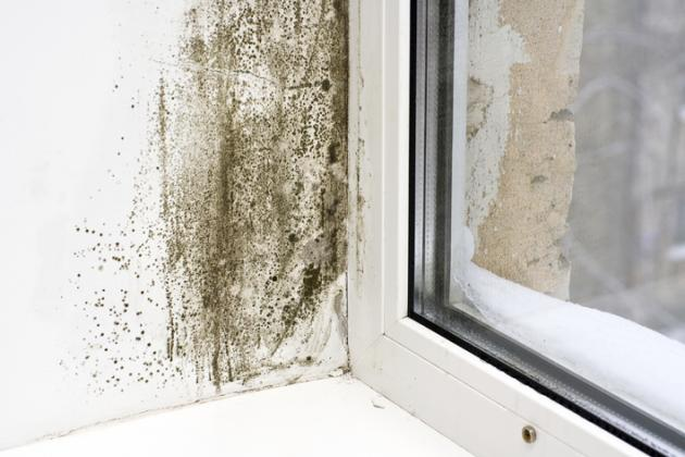 damp & draught proofing